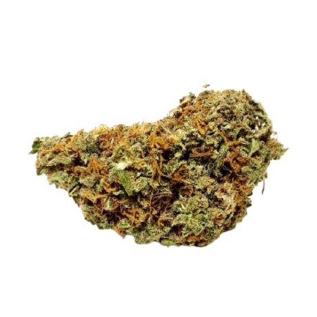 Fleurs de cbd Orange bud indoor