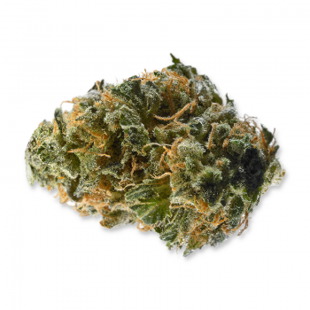 Fleurs de CBD Gispsy Haze de qualité Premium